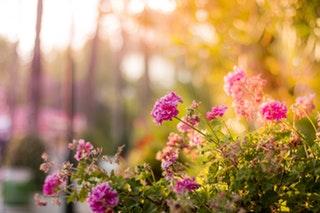 A kertészkedés egészségügyi előnyei